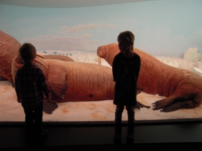 Expedition to Zoological Museum, Copenhagen